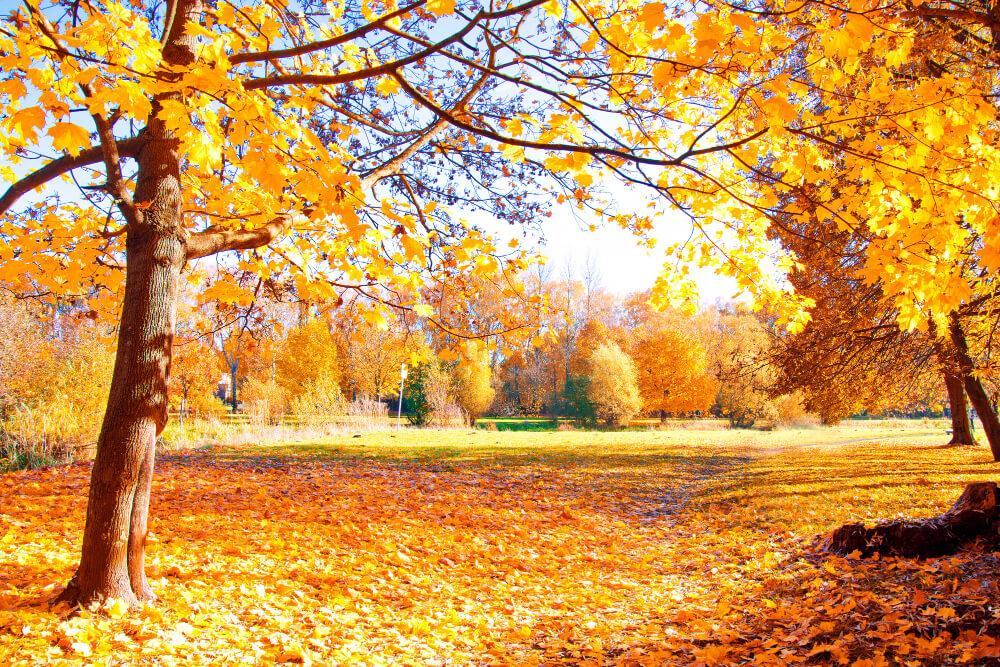 Michel au jardin automne